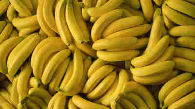 A Bunch Of Cocaine: Boxes Of Donated Bananas Contained $17.8 Million Worth Of Drugs