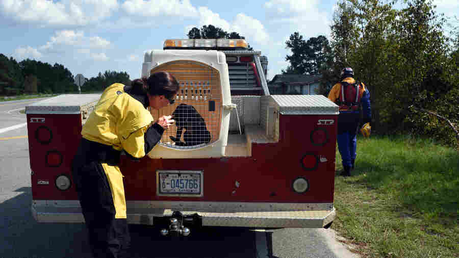 PHOTOS: As Florence Floodwaters Rose, Rescuers Helped Hundreds Of Animals In Danger