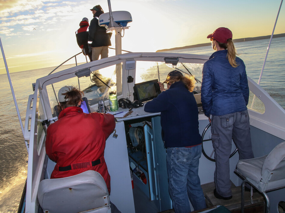 The New England Aquarium team searching for right whales, at sunrise in the Bay of Fundy. Johanna Anderson and Kelsey Howe scan the waters while Marianna Hagbloom logs data, Amy Knowlton adjusts a GPS unit, and Brigid McKenna steers the Nereid. (Murray Carpenter for NPR)