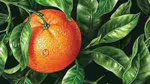 'Bitter Orange' Keeps The Tension Simmering