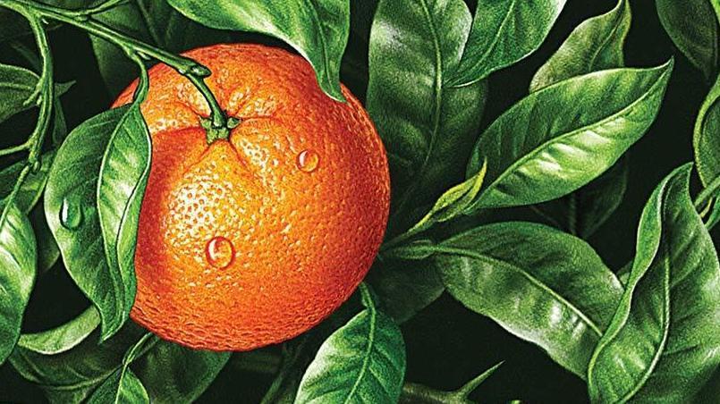 Etwas Neues genug Bitter Orange' Keeps The Tension Simmering : NPR #JG_32