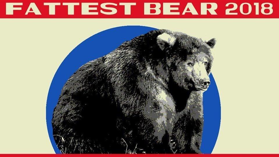 'Her Radiant Rolls' Put Her Over The Top: Alaska Park Names Its 'Fattest Bear'