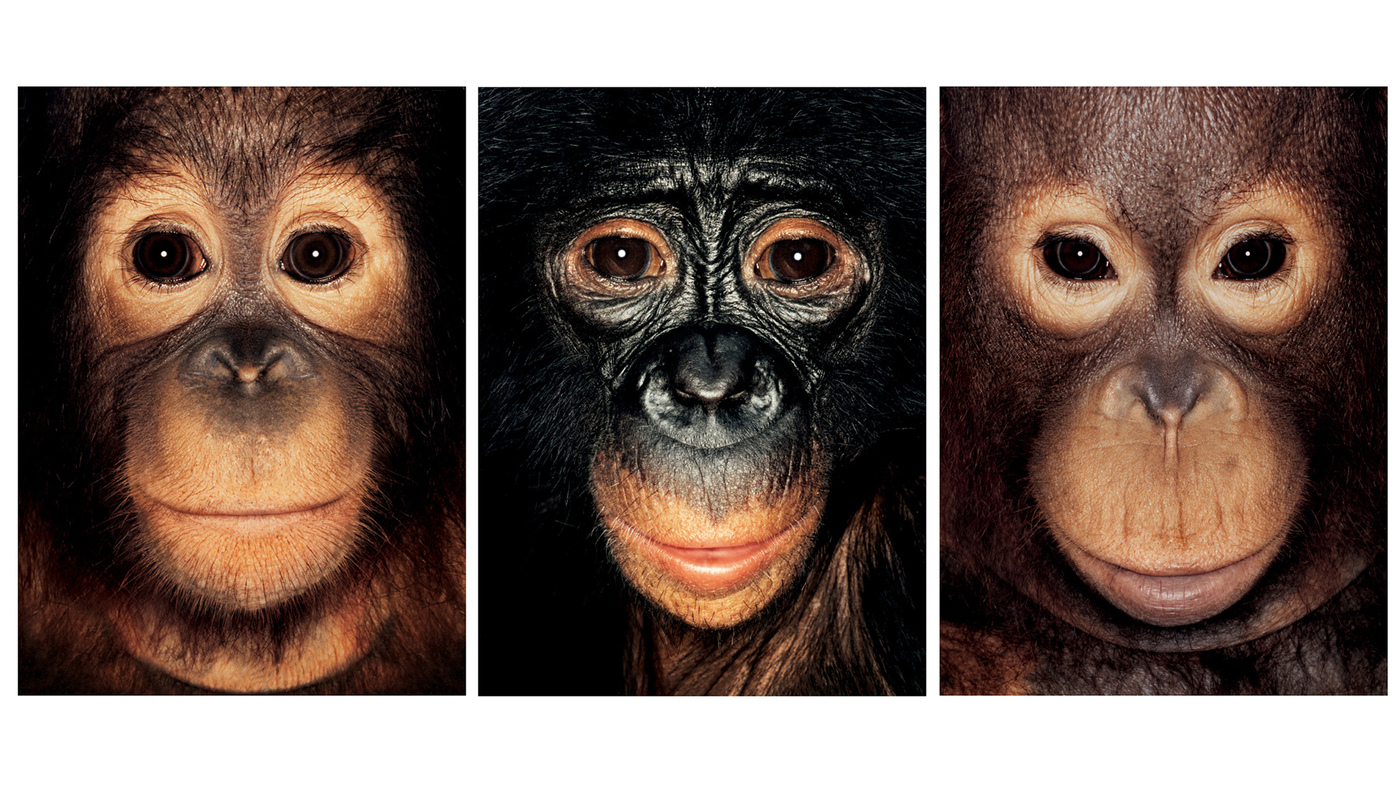 Steven Wise: If Chimpanzees Can Feel And Think, Should They Also Have Legal Rights?