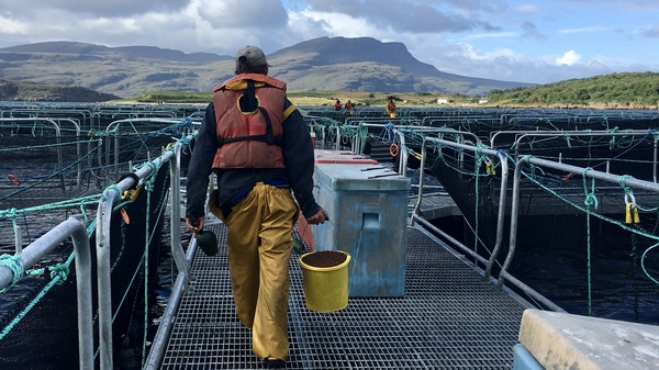 A worker heads out to hand-feed fish at a Scottish salmon farm, a method that is unusual among fish farms.