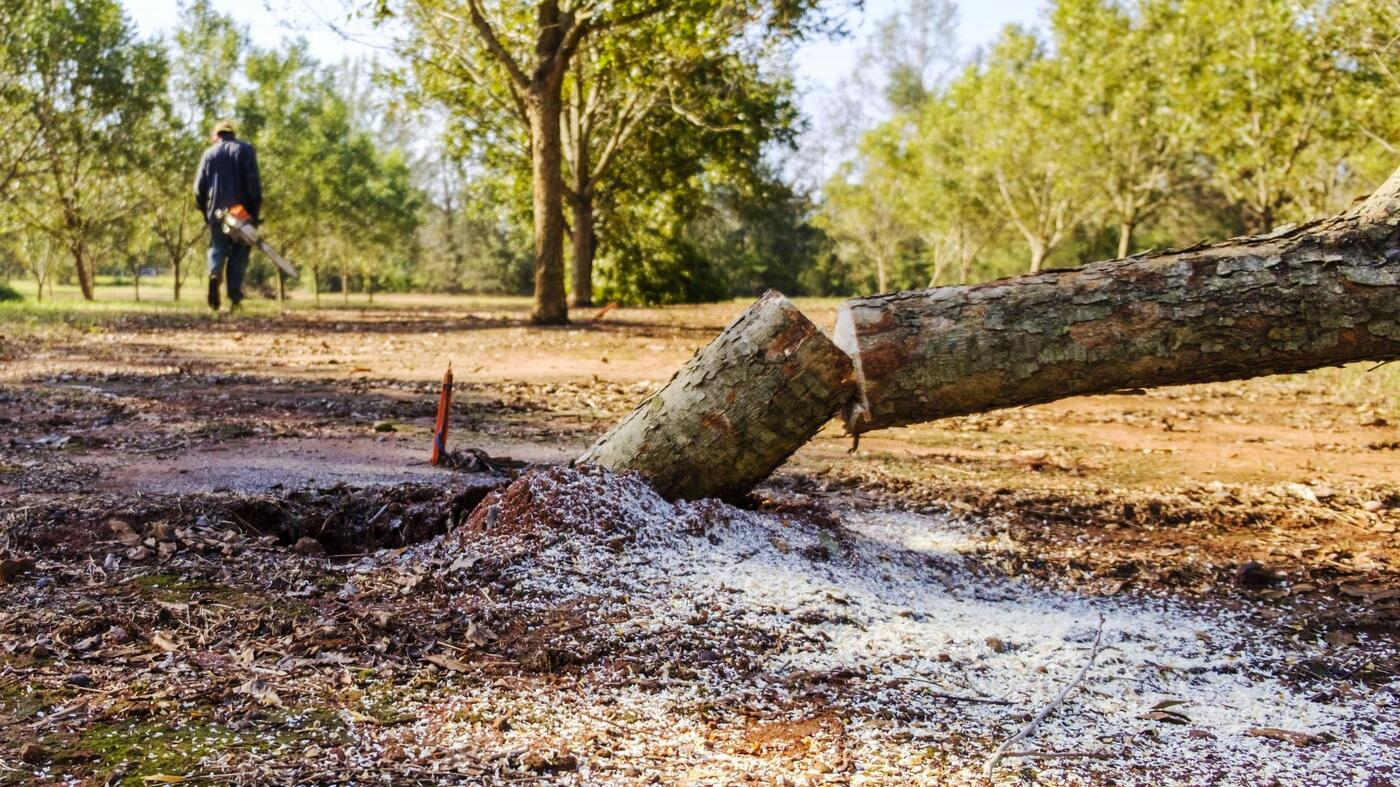 Another Storm Victim Pecan Groves In Southwest Georgia The Salt