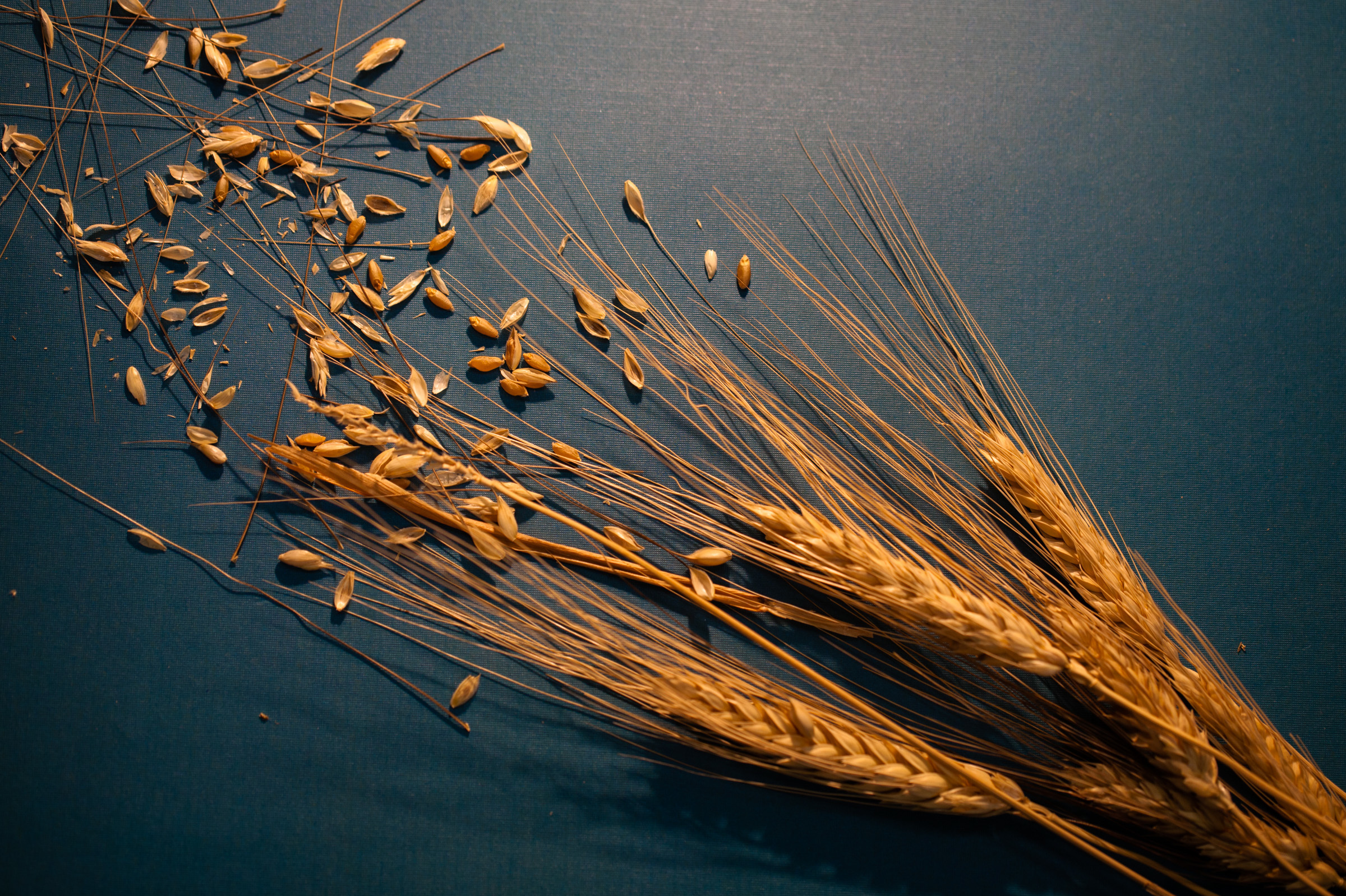 5 Major Crops In The Crosshairs Of Climate Change