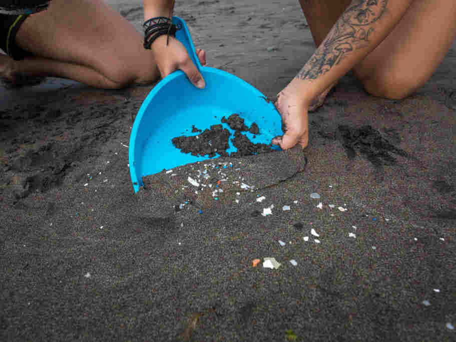 Plastic particles - or microplastics - have been found in human feces