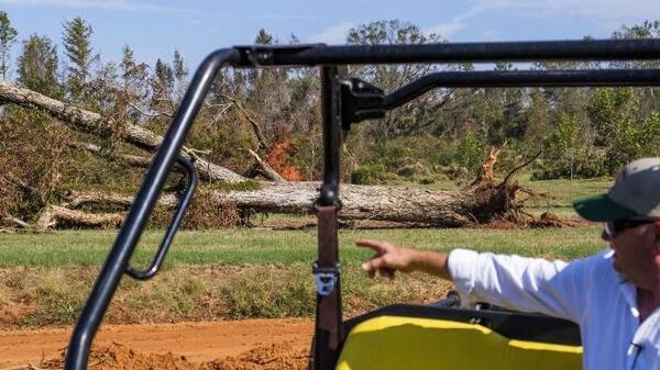 Pine Knoll Plantation farm manager Mitch Bulger near one of the thousands of pecan trees blown down by Hurricane Michael.
