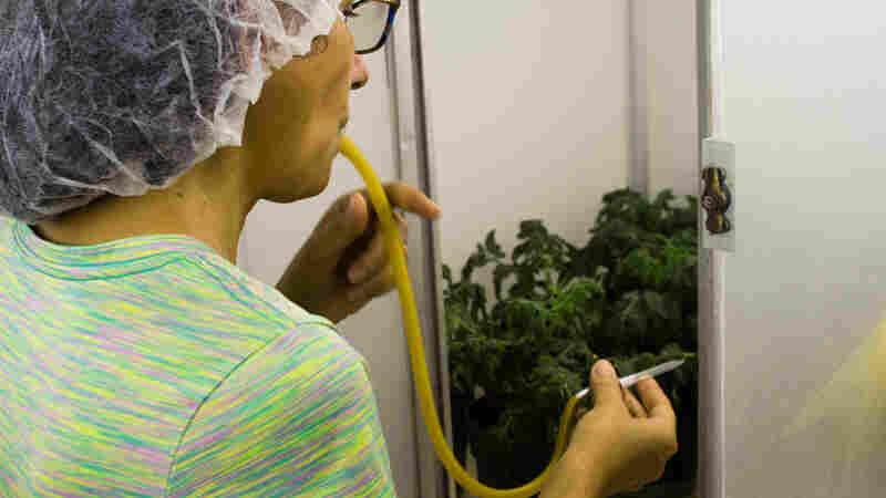 五角大楼是否会修改病毒来拯救作物 - 还是要进行生物战?