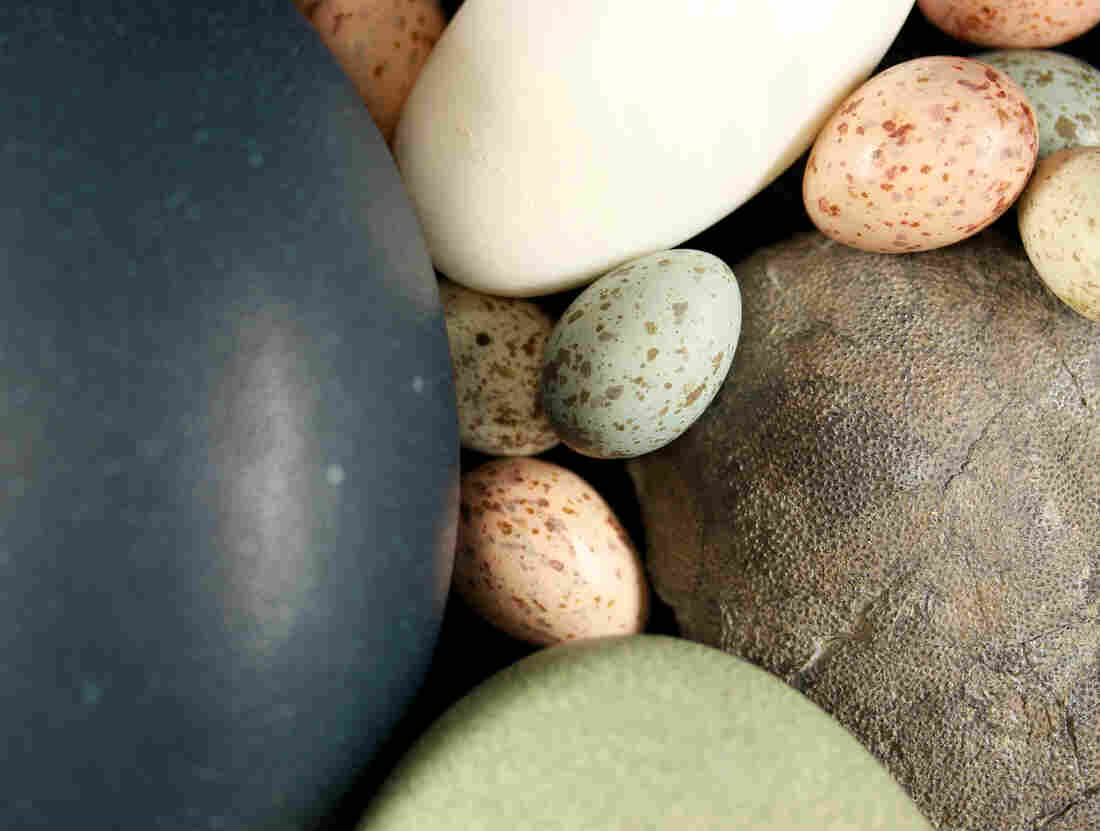Coloured bird, dinosaur eggs in same evolutionary basket