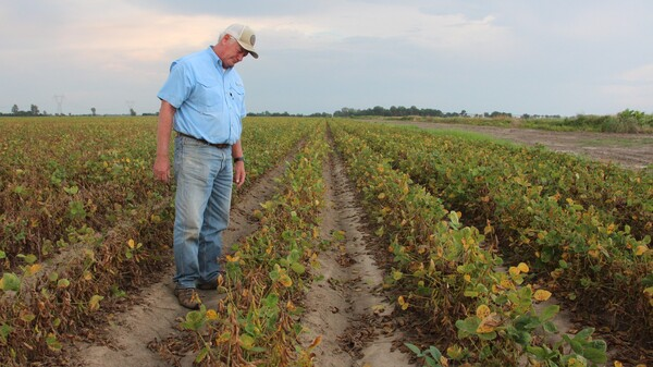 Arkansas farmer David Wildy inspects a field of soybeans that were damaged by dicamba in 2017.