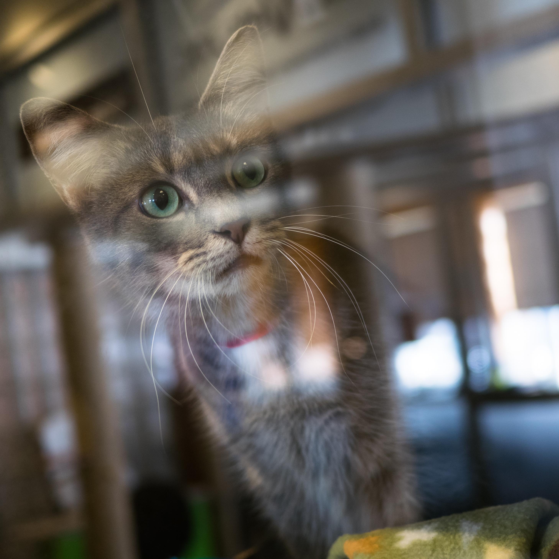To Decrease Bird Kills, Cat Lovers Team Up With Bird Lovers In D.C. Cat  Count : NPR