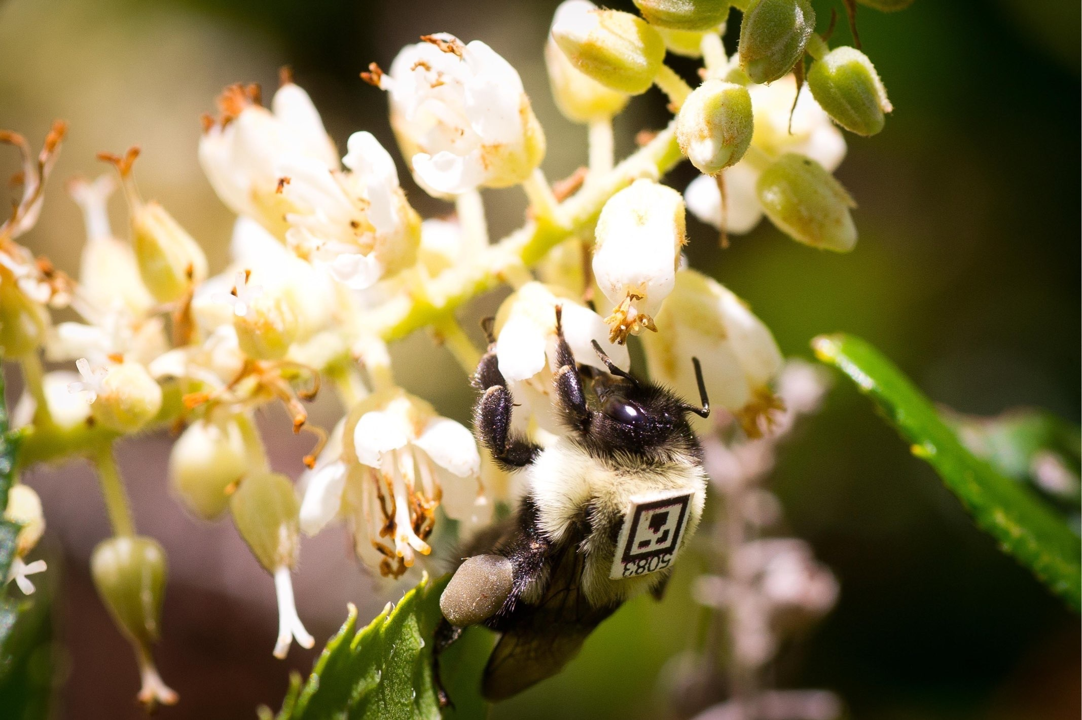 Scientists Spy On Bees, See Harmful Effects Of Common Insecticide