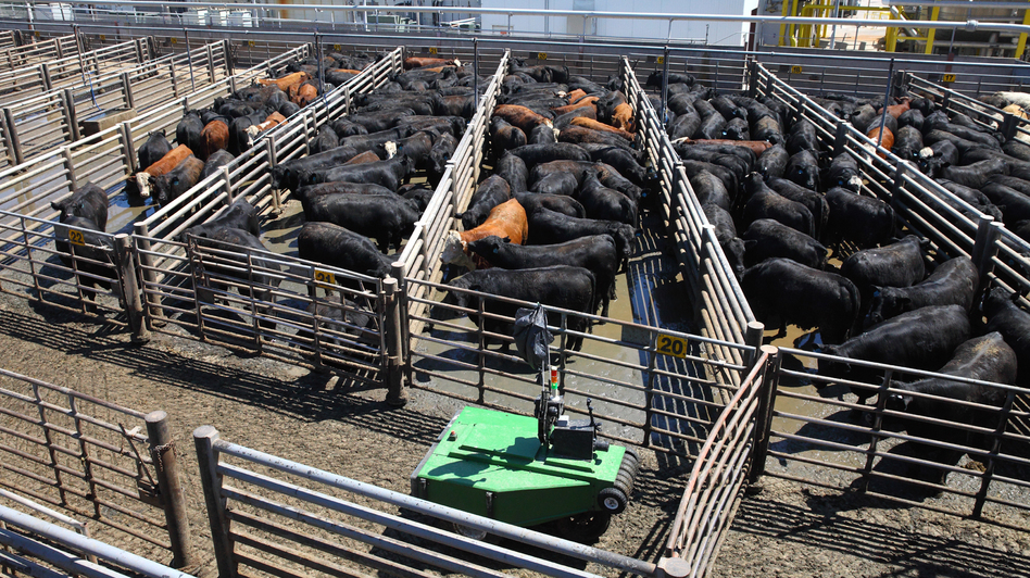 "Cargill calls the robotic cattle driver ""a first in the industry,"" and hopes that it will improve worker safety."