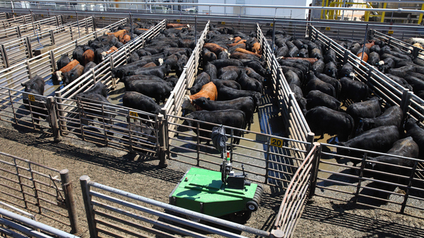 """Cargill calls the robotic cattle driver """"a first in the industry,"""" and hopes that it will improve worker safety."""