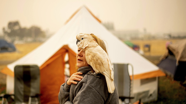 Suzanne Kaksonen and her cockatoo Buddy camp at a makeshift shelter outside a Walmart in Chico, Calif. on Wednesday. Kaksonen, a resident of Paradise, lost her home in the blaze.