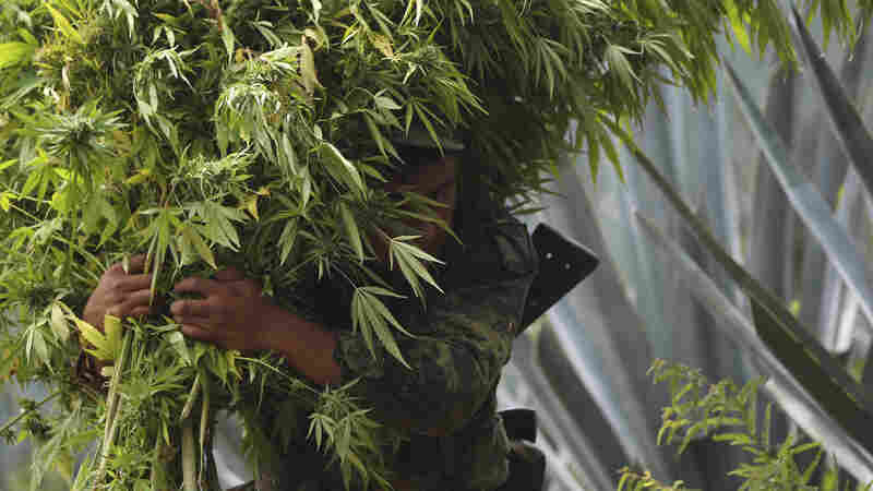 Mexico Looks To Be Next To Legalize Marijuana