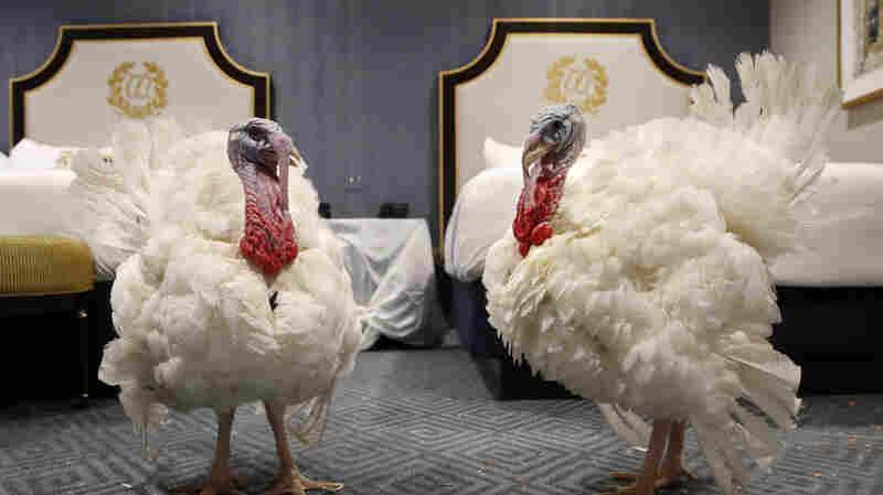 President Trump Pardons 2 Thanksgiving Turkeys