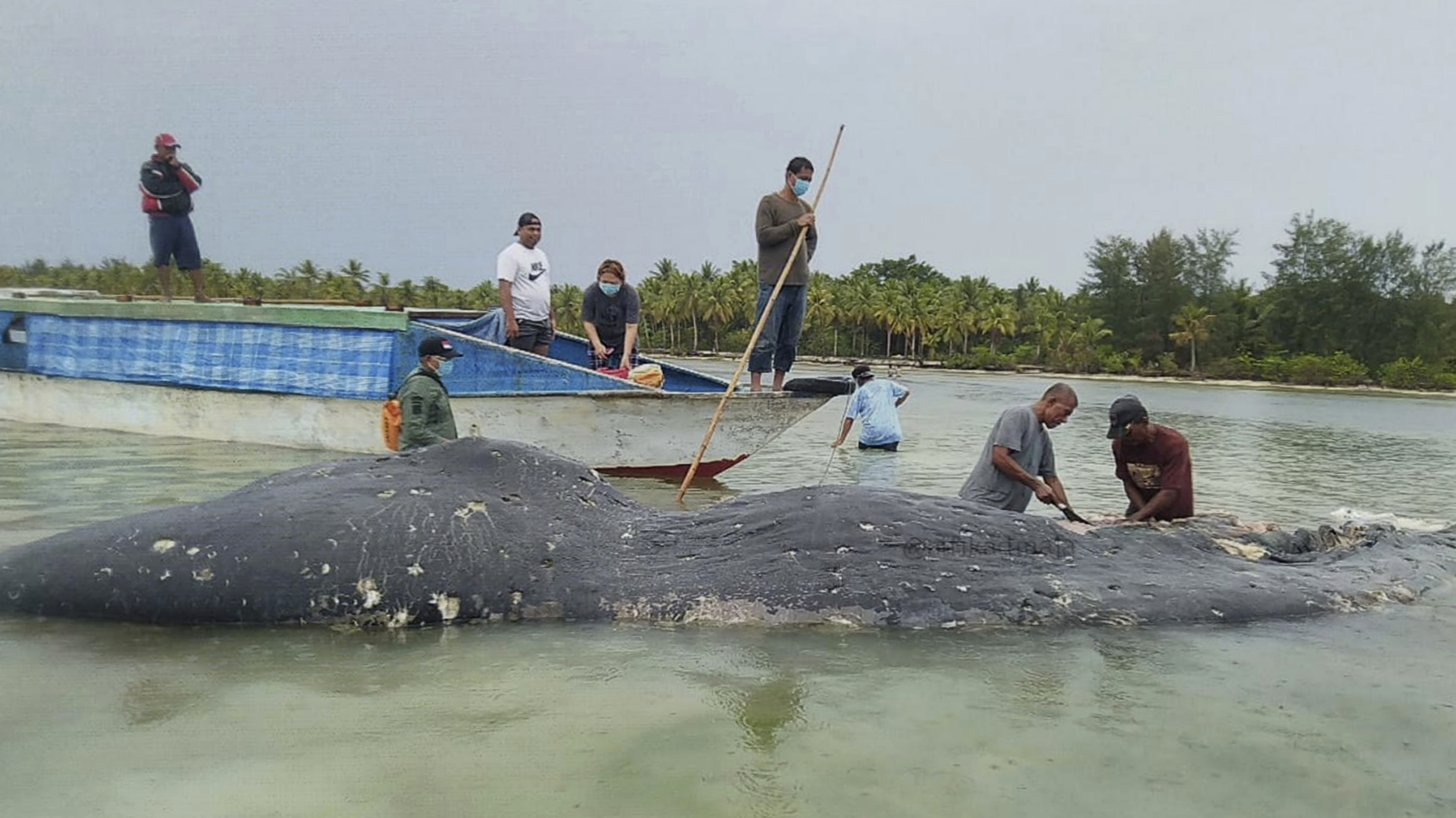 npr.org - Merrit Kennedy - Researchers Find 115 Plastic Cups In Dead Whale's Stomach
