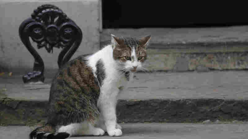Watch: Larry The Cat Does Him And Brings A Bit Of A Brexit Breather
