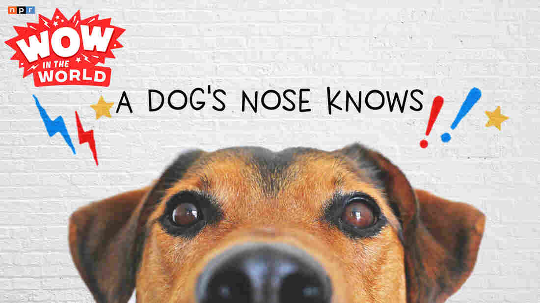What in the world is a dog's secret sniffing power? How in the world do their noses know more than ours?