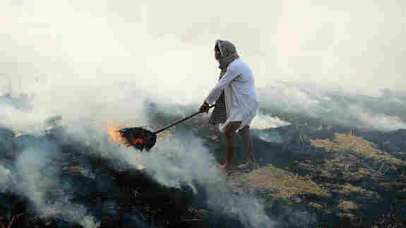 What Will Persuade Rice Farmers In Punjab To Stop Setting Fires In Their Fields?