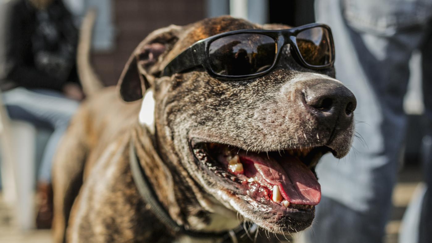 Dog Show! : Code Switch : NPR