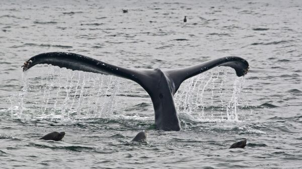 Scientists are concerned the seismic activity could harm animals such as humpback whales.