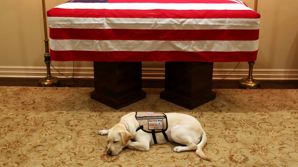 Former President George H.W. Bush's service dog lies in front of his casket in Houston on Sunday. The 41st president died Friday at the age of 94. (Evan Sisley/Office of George H.W. Bush/AP)