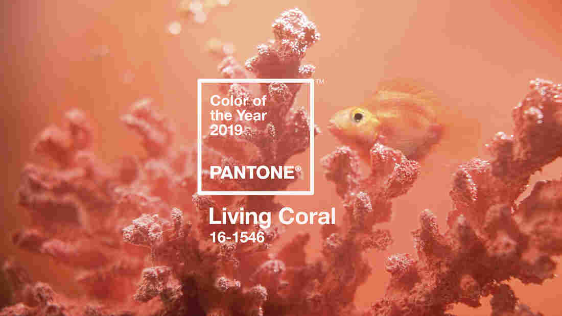 Pantone reveals 2019 Color of the Year: Living Coral