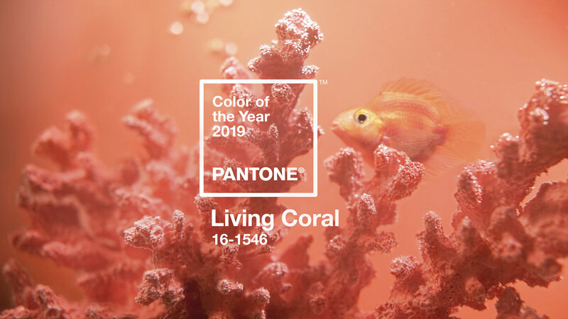 A Royal Hue Living Coral Crowned Color Of The Year For 2019 Npr