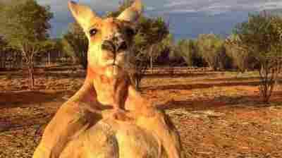 Roger The Buff Kangaroo, Beloved Online, Dies At Age 12