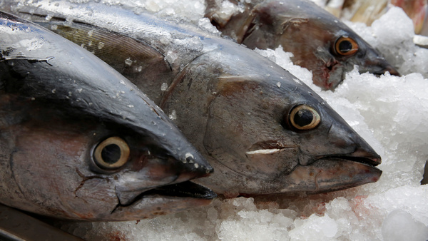 Tuna, seen on display last year at a fish market in Mexico City. The World Trade Organization dealt Mexico a defeat on appeal Friday, dismissing the country