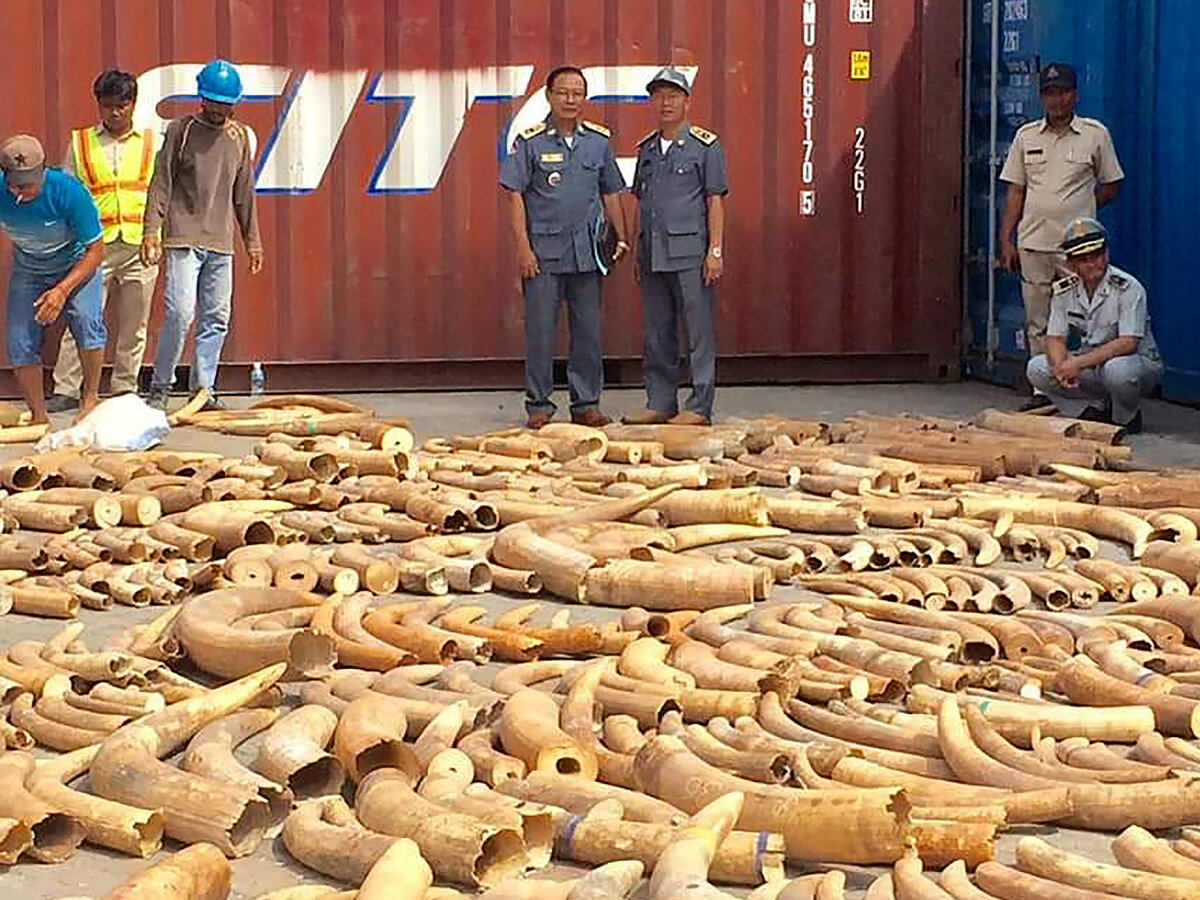 30+ tons of ivory seized by Cambodia