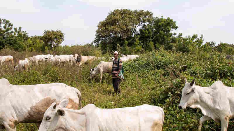 Herders Vs. Farmers: A Deadly Year In Nigeria