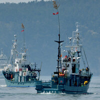 Japan Reportedly Will Leave International Whaling Group To Resume Commercial Hunts