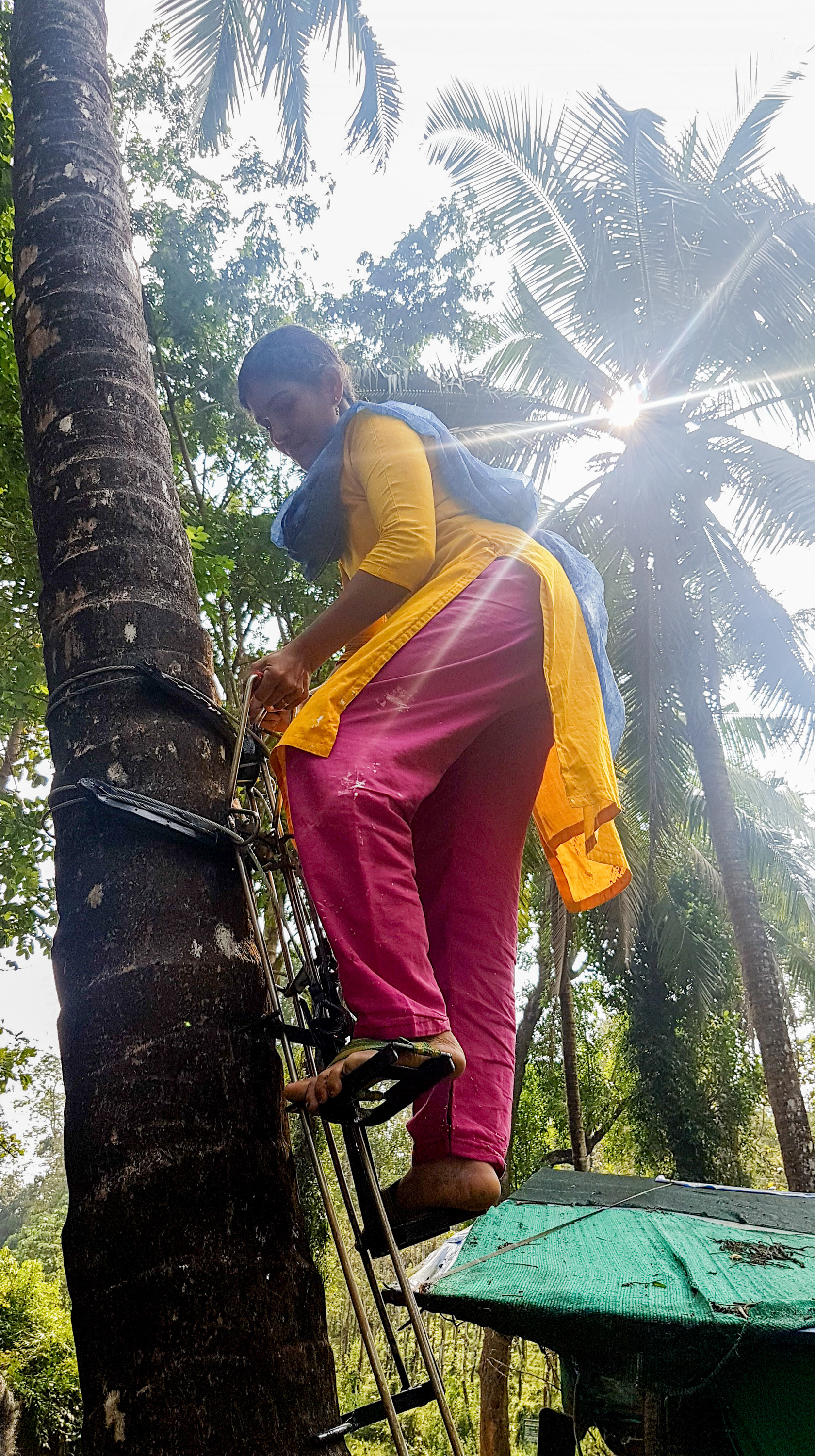 Kerala Needs Coconut Pickers — So Women Are Stepping In ...
