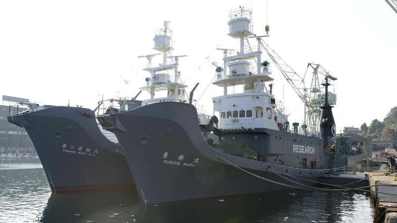 Japan Embraces Commercial Whaling, Pulls Out Of Global Alliance That