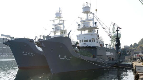 """Japan once labeled its whaling vessels with prominent """"Research"""" tags — but the country will resume commercial whaling hunts in 2019. Here, the whaling ships Yushin Maru (R) and Yushin Maru No. 2 are seen before leaving for the Antarctic Ocean for a whale hunt in 2015. In the future, Japanese whaling ships will not operate in the Antarctic."""
