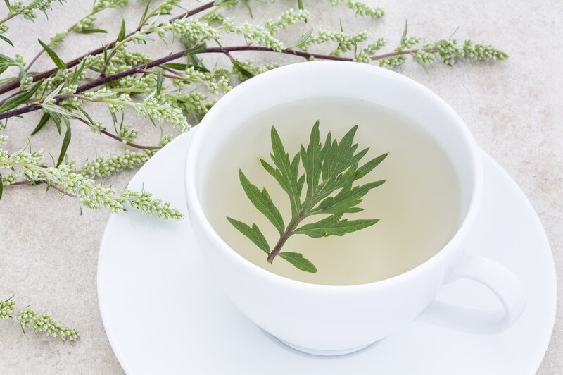 Study: Is Wormwood Tea As Good As Drugs At Curing The Parasitic
