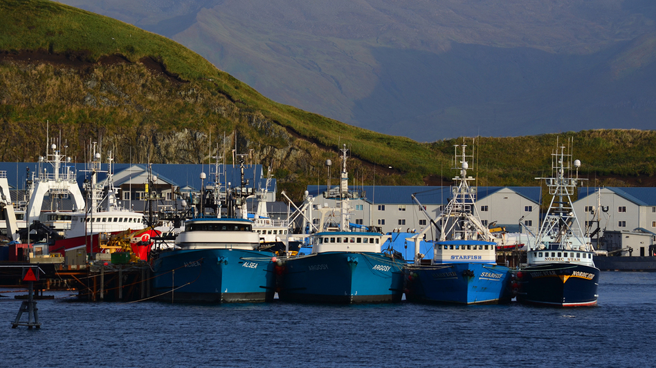 Fishing trawlers lined up in Dutch Harbor, in the Aleutian Islands, Alaska. The Alaska pollock fishery is worth about $750 million each year, and it's scheduled to open Jan. 20. But the heavily regulated industry is facing delays in inspections because of the shutdown. (James Brooks/Flickr)