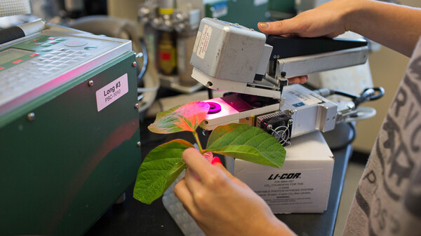 Scientists have re-engineered photosynthesis, the foundation of life on Earth, creating genetically modified plants that grow faster and bigger. Above, scientists measure how well modified tobacco plants photosynthesize compared to unmodified plants.