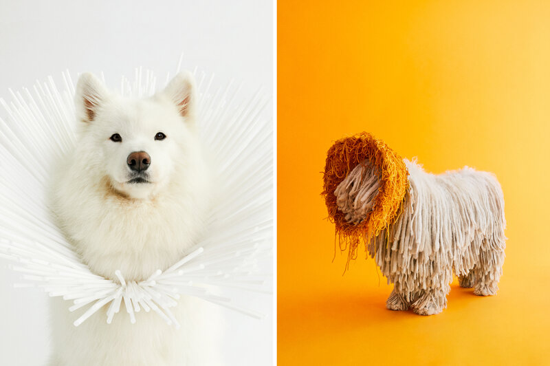 Image of: Pupper All Good Dogs Photographer Transforms Canines Cones From Shame To Glam Wellington Grande Portraits Show Dogs Transformed By Cones Of Shame The Picture Show