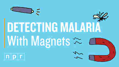 VIDEO: See How A Cheap Magnet Might Help Detect Malaria