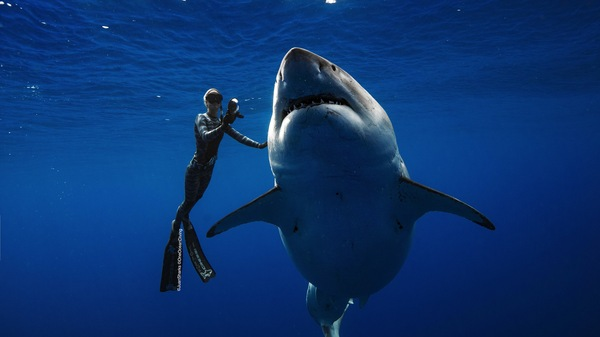 Ocean Ramsey is pictured caressing the great white shark believed to be Deep Blue, a 20-foot long female shark more than 50 years old.