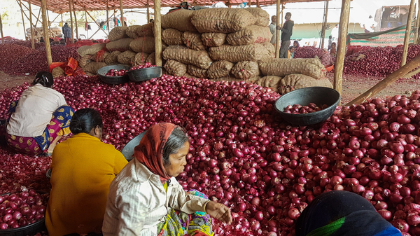 Workers sort onions at a wholesale market in Maharashtra. The state is India