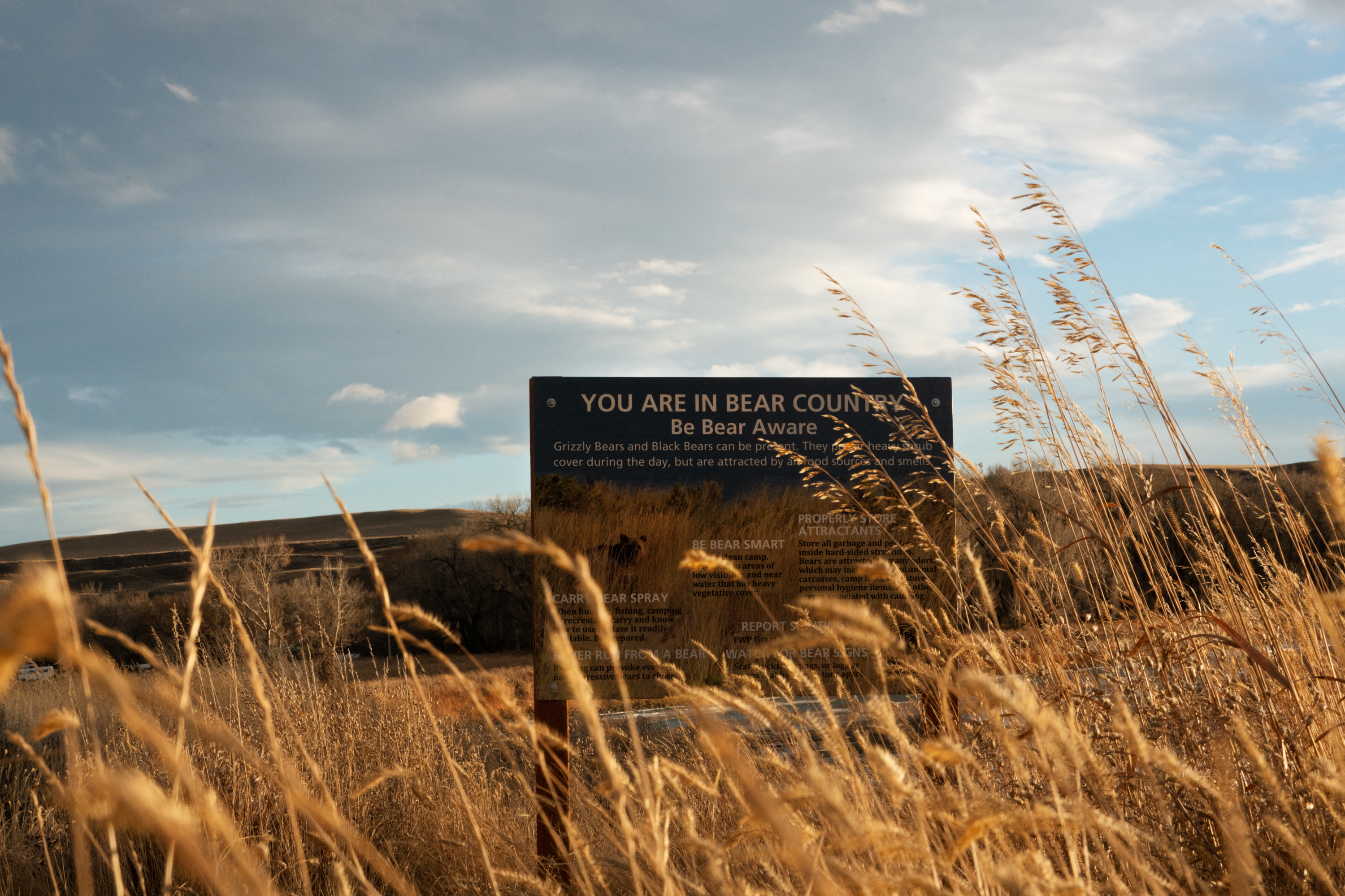 """A sign that reads """"You are in bear country, be bear aware"""" stands amongst tall grasses next to the Marias River in northwest Montana."""
