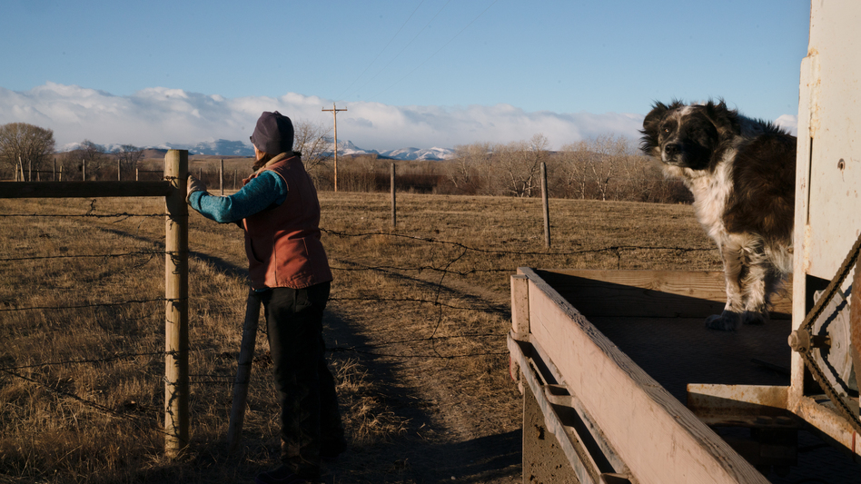 Bradley closes the gate to one of the pastures where her cows graze. She likes having grizzlies around, most days, and would like to see the animals expand and do well, but right now everything feels stuck.