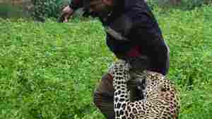 Leopard Runs Loose In Indian City, Terrorizing Residents Before Capture