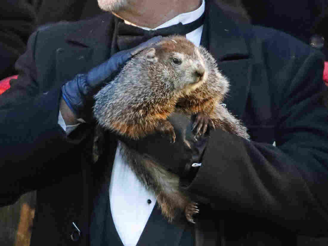 Punxsutawney Phil doesn't see his shadow, predicting early spring
